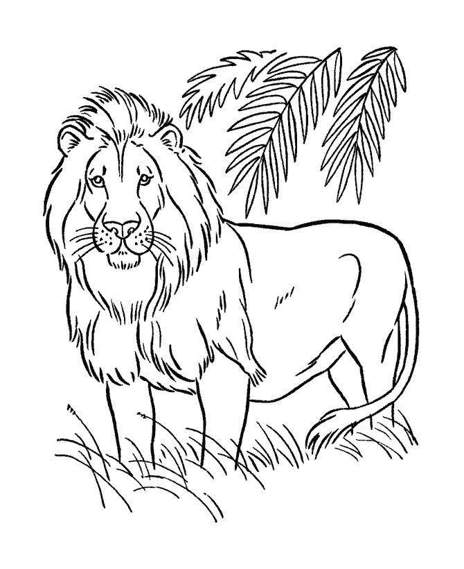 Safari Animals Coloring Pages: 729 Best Animal Printable Images On Pinterest