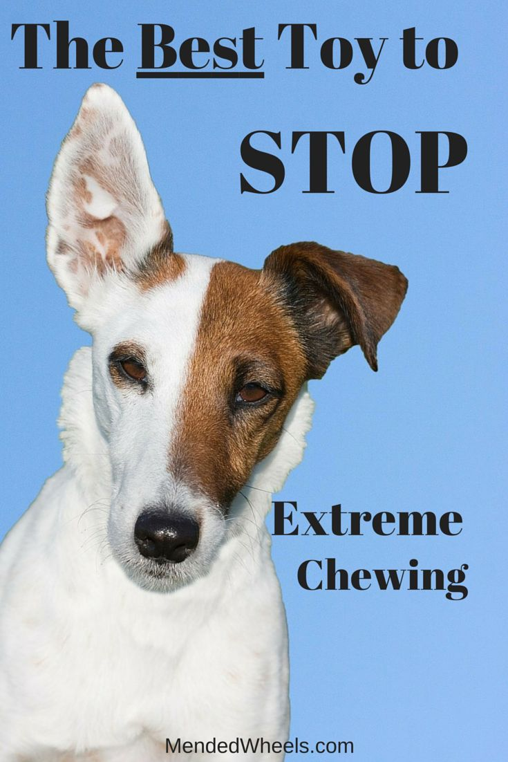 best 25+ stop dog chewing ideas only on pinterest | puppy teething