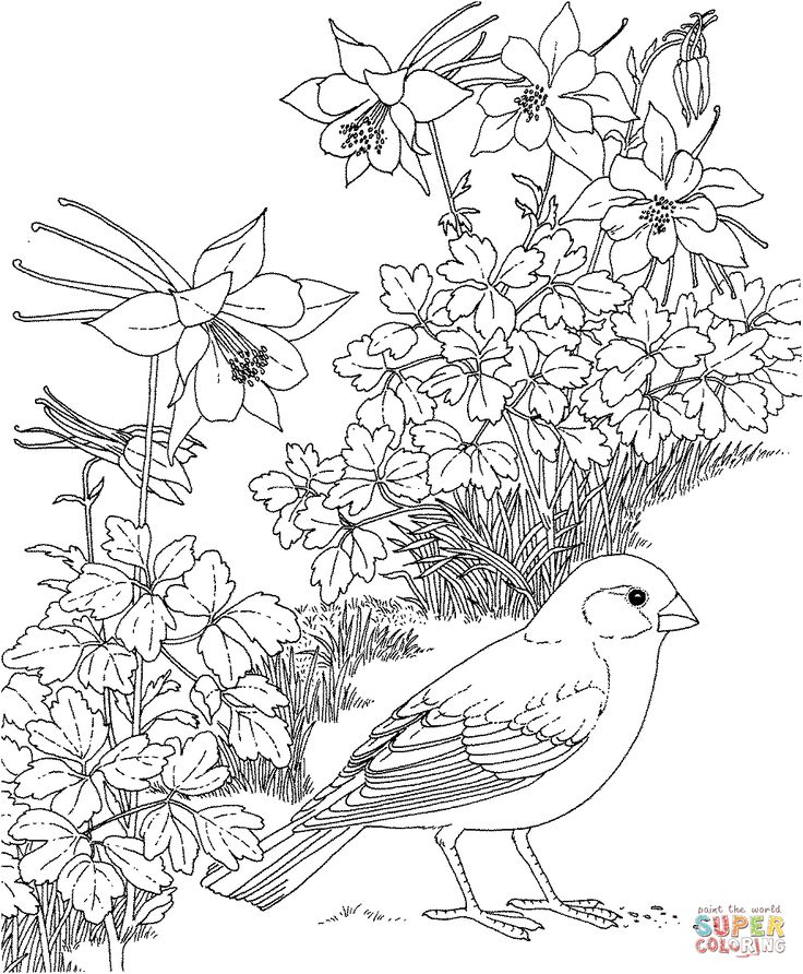 california gull and sego lily utah state bird and flower coloring page from state birds category select from 25238 printable crafts of cartoons nature