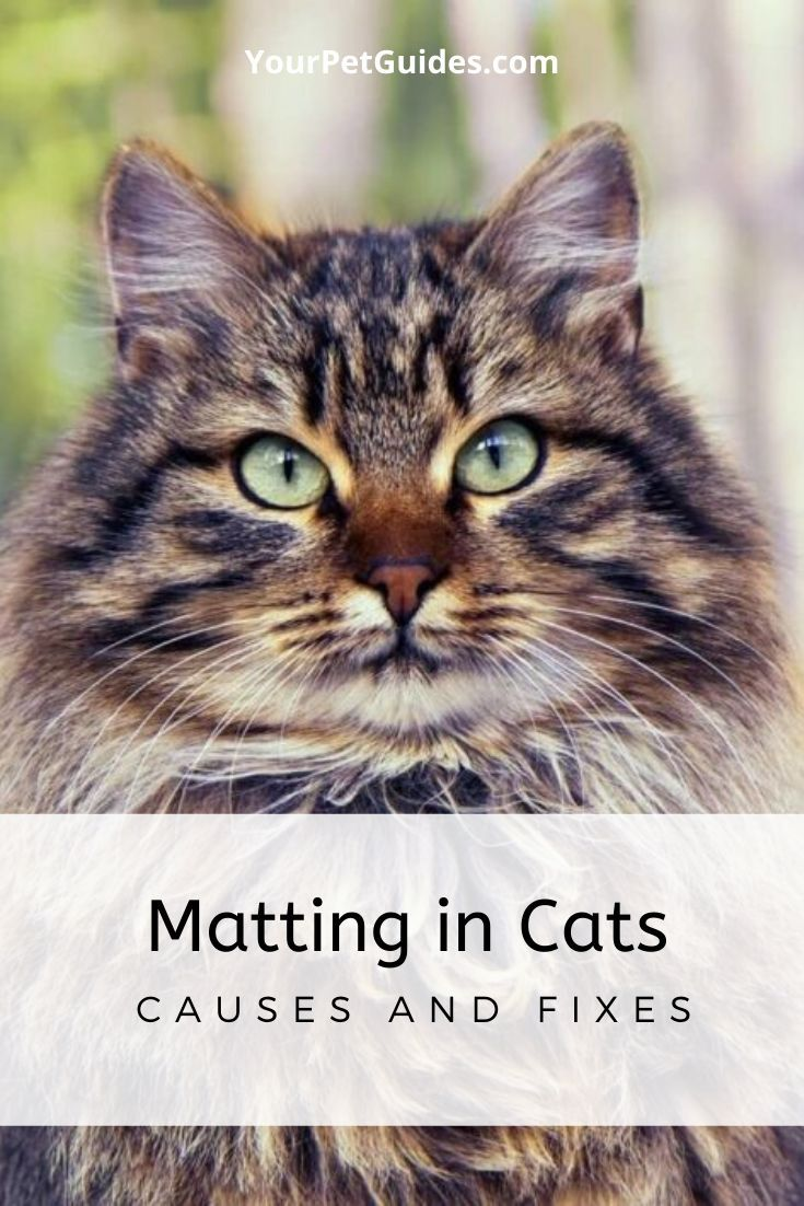 Matting In Cats In 2020 Cats Pets Cat Behavior