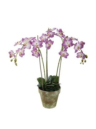 Winward Faux Phalaenopsis Orchid Bunch in Terracotta Pot, Pink