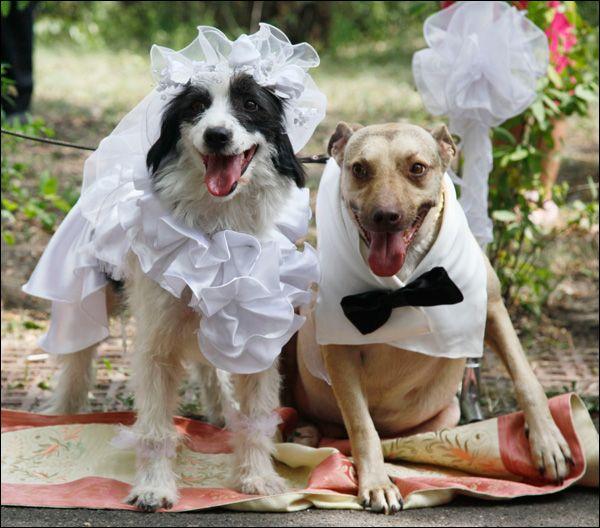 Собачья-свадьба.-Заказ-свадьбы-в-агентстве..jpg (600×528)