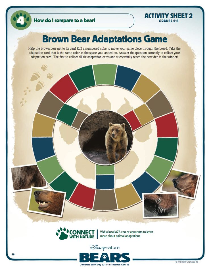 brown bear adaptations cards disneynature pinterest brown bears and brown bears. Black Bedroom Furniture Sets. Home Design Ideas