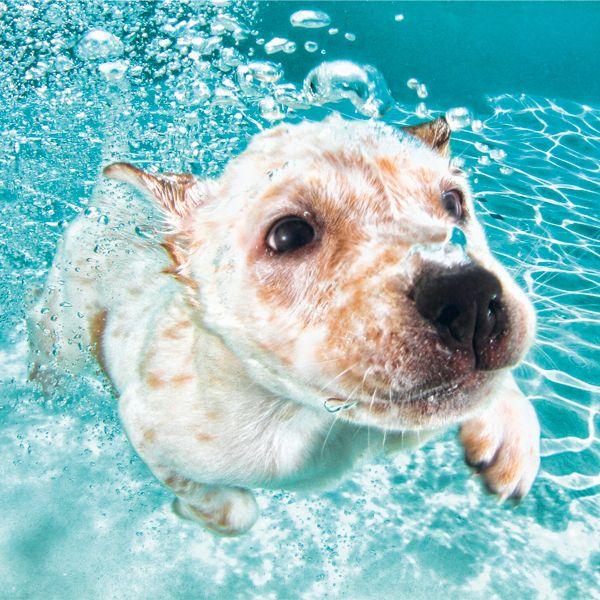 Hunde unter Wasser – Die Leidenschaft von Seth Casteel
