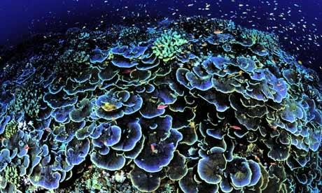 Coral off Jarvis Island (between Hawaii & Cook Islands)