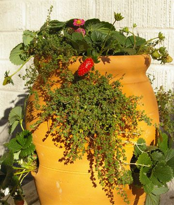 This Week S Diy Project Plant A Strawberry Jar Pike Nurseries