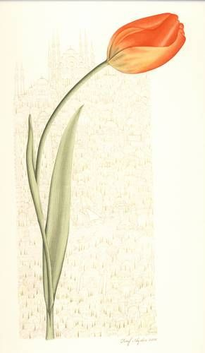 Tulip miniature by Raif Aydin