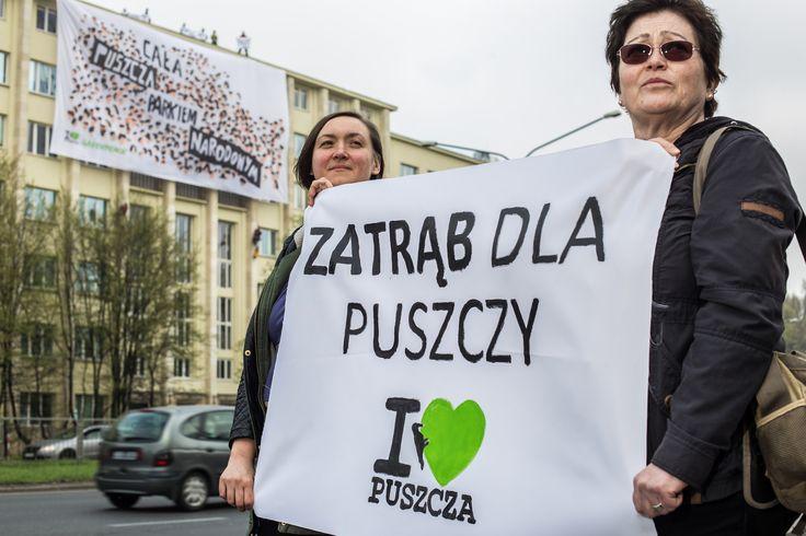 """Aktywistki i aktywiści Greenpeace, w imieniu wszystkich Obrońców Puszczy, wspięli się na Ministerstwo Środowiska i rozwinęli baner z hasłem """"Cała Puszcza parkiem narodowym"""". W ten sposób apelują o jedyny skuteczny ratunek dla Puszczy Białowieskiej: objęcie całego jej obszaru parkiem narodowym.  Przejeżdżający mieszkańcy naciskając klaksony wyrażają poparcie dla aktywistów."""