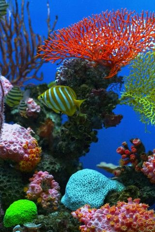 Synced Theme backgrounds | aquarium iphone wallpaper 12 jul 2010 adi iphone wallpapers leave a ...