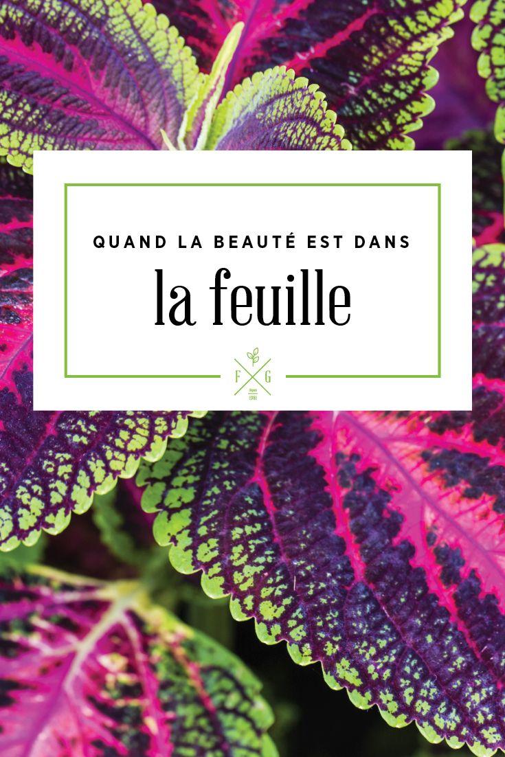 Quand la beauté est dans la feuilles (fleurs annuelles et vivaces). La Ferme Grover, Laval.