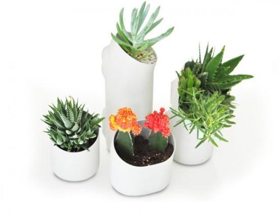 Beautiful Indoor Planter Pictures