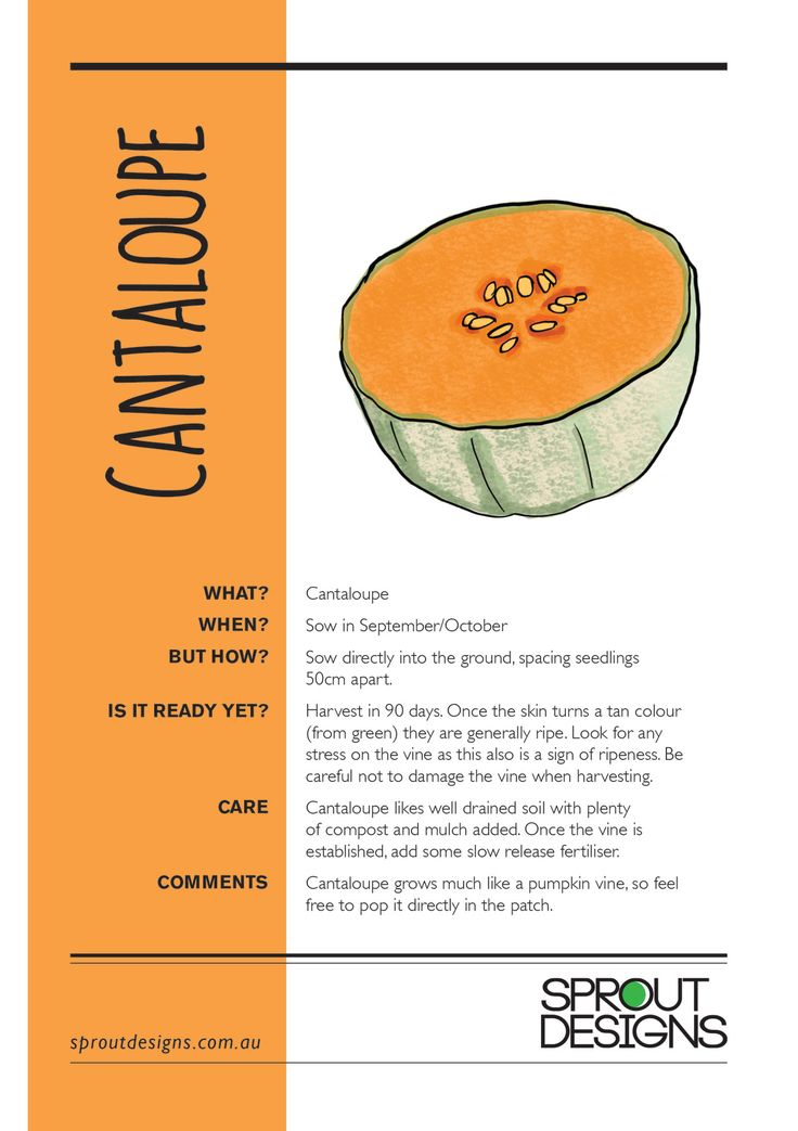 how to grow cantaloupe in a pot