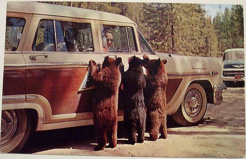 Ac Won T Turn On >> Yellowstone - Vintage Postcard - Mom would have flipped ...