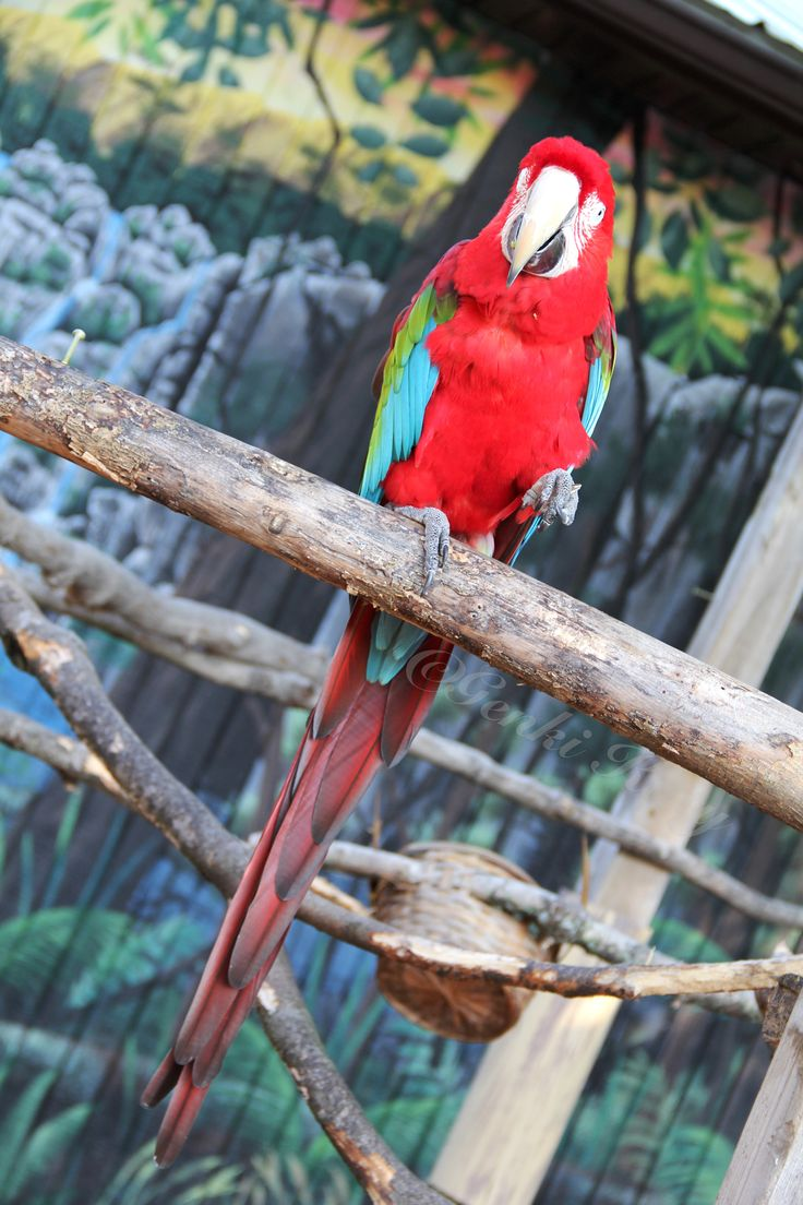 South Bend, Indiana zoo Parrot