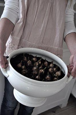 grote terrine of andere pot vullen met potgrond en bolletjes, leuk om binnen te groeien vlak voor de lente begint. misschien een mengsel van blauwe (witte) druifjes, tulpen, narcissen, krokusjes, hyacinten en sneeuwklokjes