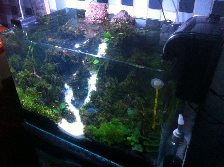 "6 months. my aquascape ""air terjun penganten"""