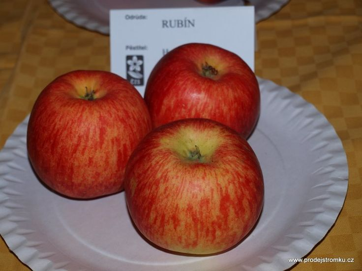 Rubín jabloň M7