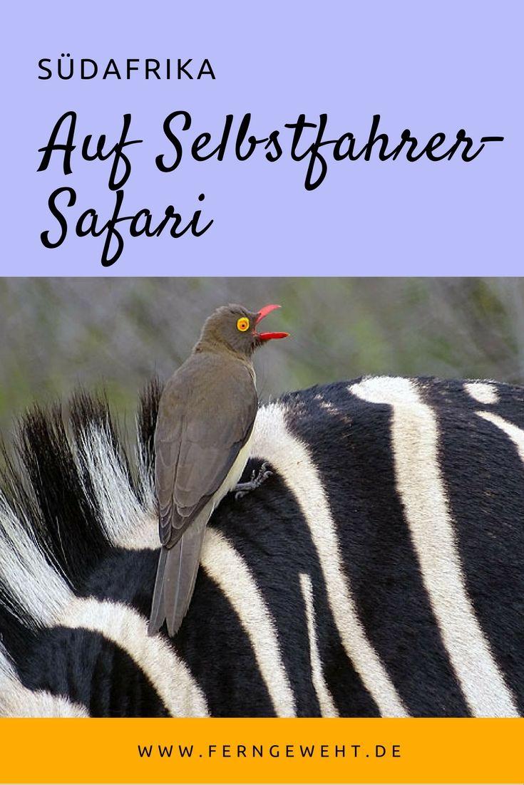 Reise nach Südafrika oder Namibia geplant? Was solltest du bei Safaris in Game Parks wie den Krüger Nationalpark oder den Etosha Nationalpark beachten? Ich bevorzuge die Selbstfahrer-Safari.
