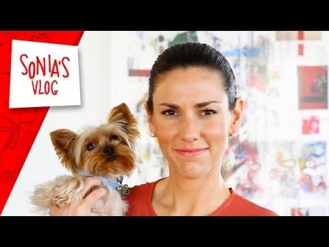 Travel Tips: How to Travel with your Pet - YouTube