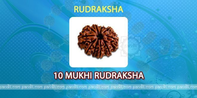 10 mukhi Rudraksh by Rahul Kaushal Astrologer  -------------------------------------------------------  It has 10 lines on it and is considered as symbol of God Vishnu. It is symbolized as Dashavtaar with Matsya, Krishan, Ram, Kashyap, Varah, Narsingh, Vaaman, Parshuraam, Budh and Kalik. After wearing 10 mukhi Rudraksh all these 10 Gods provides magical powers to the individual. http://www.pandit.com/10-mukhi-rudraksh/