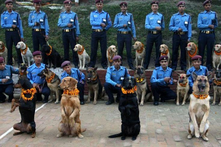 festival lealtad perros Nepal