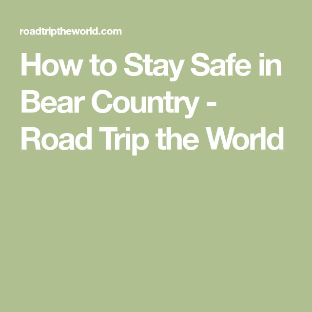 How to Stay Safe in Bear Country - Road Trip the World