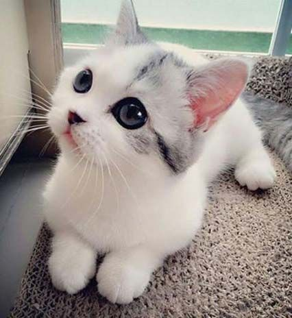 Cutest kitten ever (Source: http://ift.tt/1PWQvMQ)