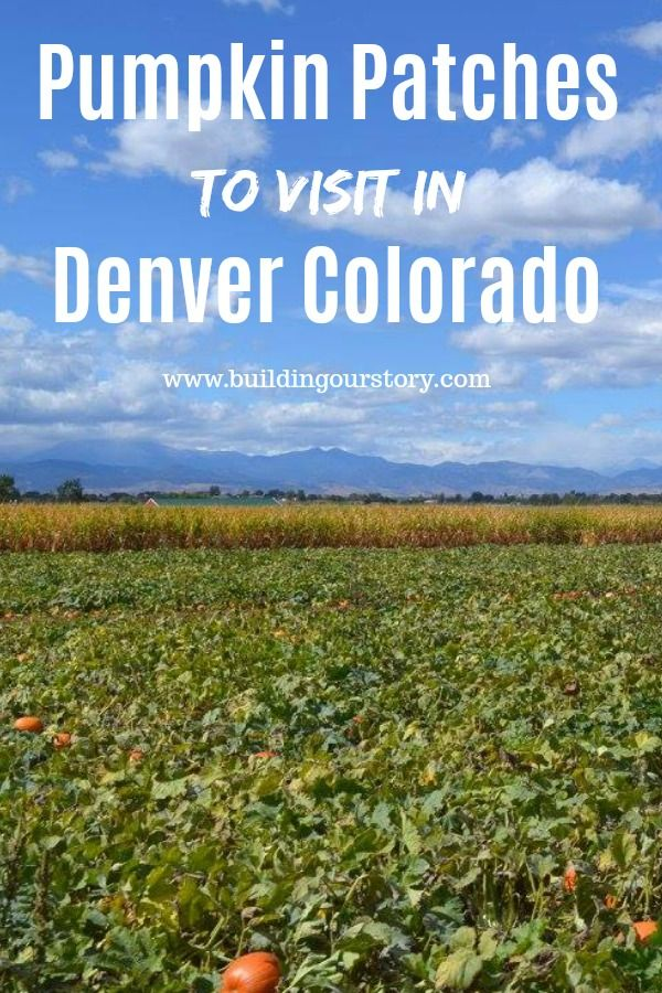 Pumpkin patches in Colorado, Pumpkin patches in Denver, great fall festivals in Denver, Fall festivals in Colorado, Fall festivals pumpkin picking