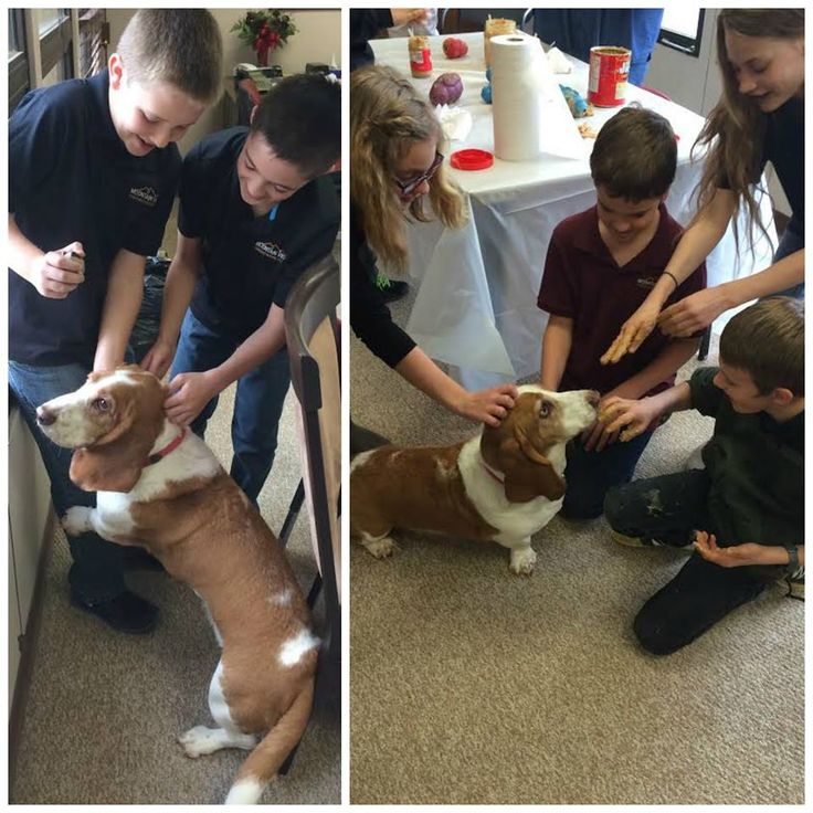 """What can we say? Kids love Mater! Especially when the kids learned he was named after """"Tow Mater"""". This 5th grade class had a wonderful time visiting our shelter a few weeks ago, but meeting Doug's Basset Mater was a highlight for many of them."""