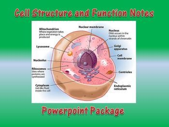 Cell Structure and Function | NSTA Learning Center