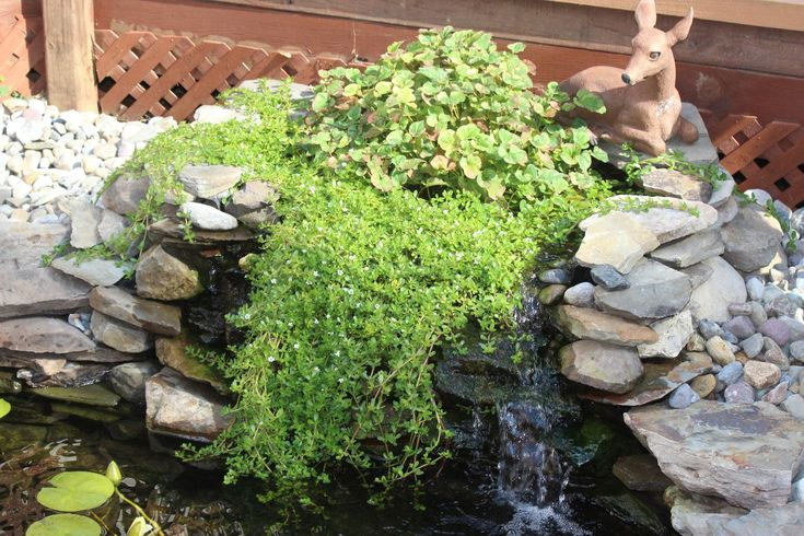 how to build a bog filter for a pond