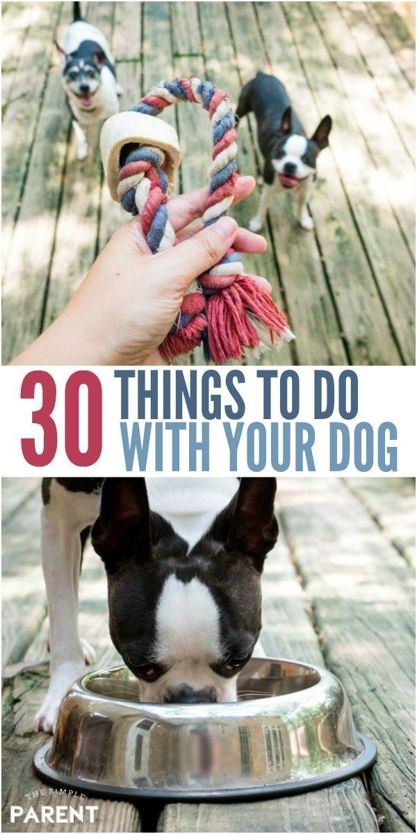 Painstaking Dog Training Aggression G Uniquedogsaccessories