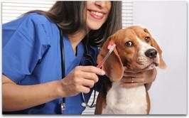 Have your furry friend clean and fresh when they check out of our Dallas area dog hotel. Petite Pooch isn't only a pet hotel, we are a full service doggy day care and Dallas pet groomer. Add a professional grooming departure service to your stay. Prices vary by breed and services selected.  #PetitePoochChateau #PetGrooming #DallasDogHotel