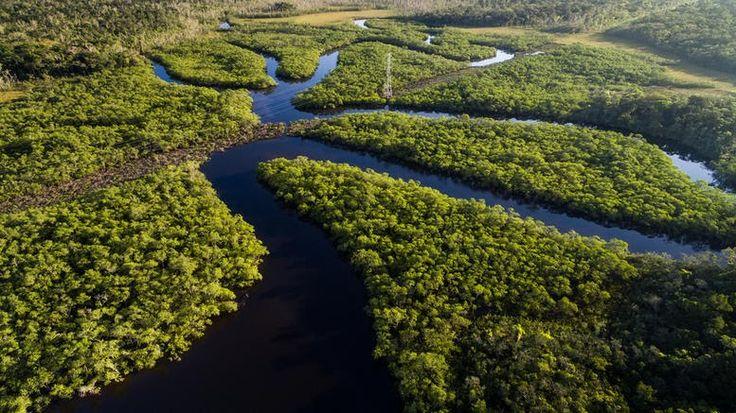 Βραζιλία: Θέλουν να δώσουν 860.000 στρέμματα δάσους για υλοτομία