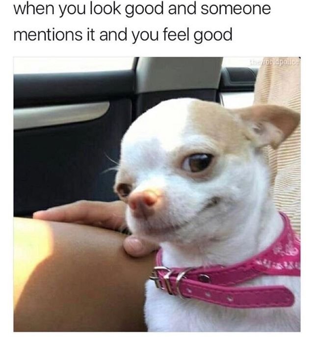 And She Knows She Looks Good Such Style Funny Dog Memes Funny