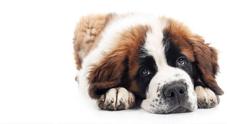Niche market... don't leave me:   Jet-a-pet - Pet Travel Services, Shipping A Pet, Pet Air Travel