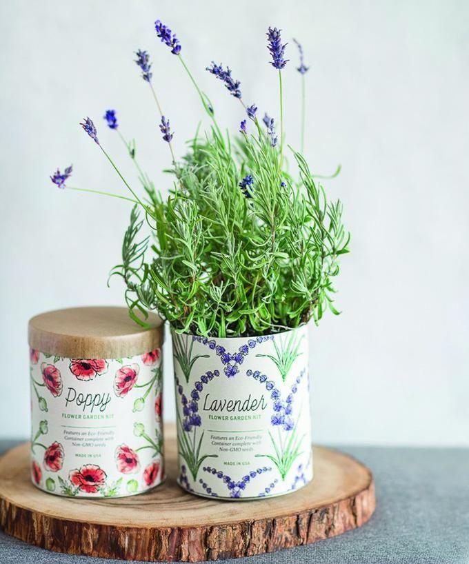 Waxed Planter Indoor Garden Kit Grow Kit Indoor Lavender Plant Garden Kits