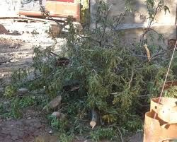 A problem that I always have with a live Christmas tree is all the left over limbs and such. I found that firing up my gas chainsaw is a huge waste of time and gas to clean up a mess like this. So make sure you use a cordless chainsaw.