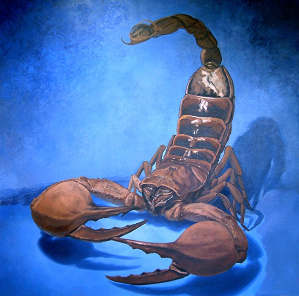 первый взгляд картинка скорпион и черепаха невідємною
