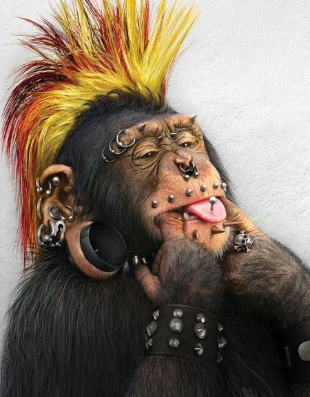 weird pictures | monkey tribal - funny monkey pictures