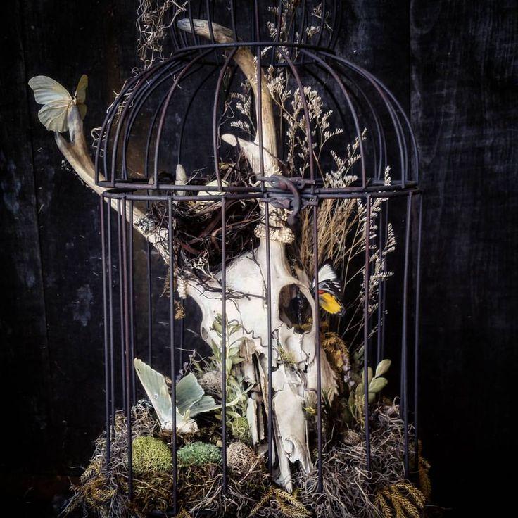 Okay, I was finally able to get a good picture of this one! Deer skull bird cage center piece~ #vintage_vanblair #handmade #ooak #deerskull #birdcage #centerpiece #centrepiece #centerpieces #wedding #macabre #nature #Halloween #samhain #butterflies...