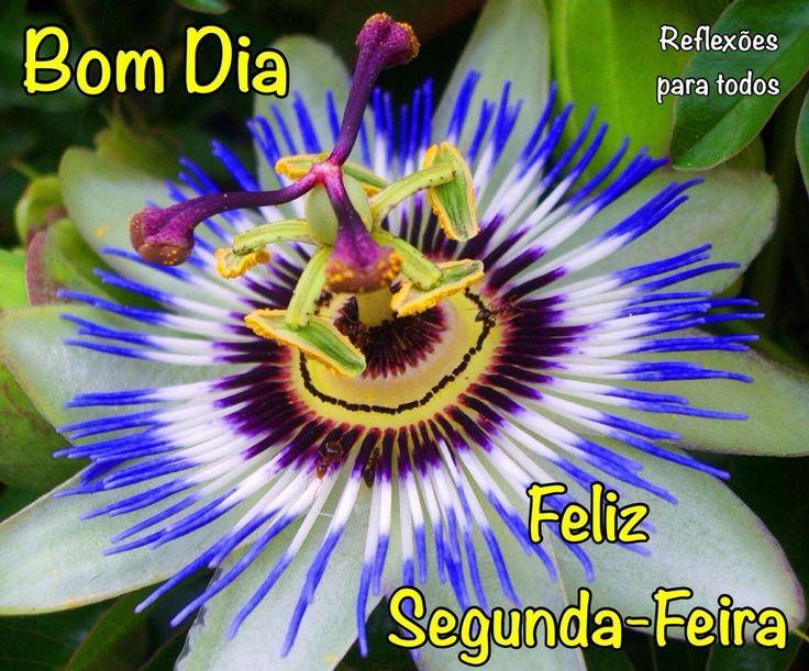 75 Best Images About Bom Fim De Semana On Pinterest: Best 25+ Feliz Segunda-Feira Images On Pinterest
