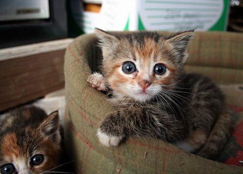 kitties of course!