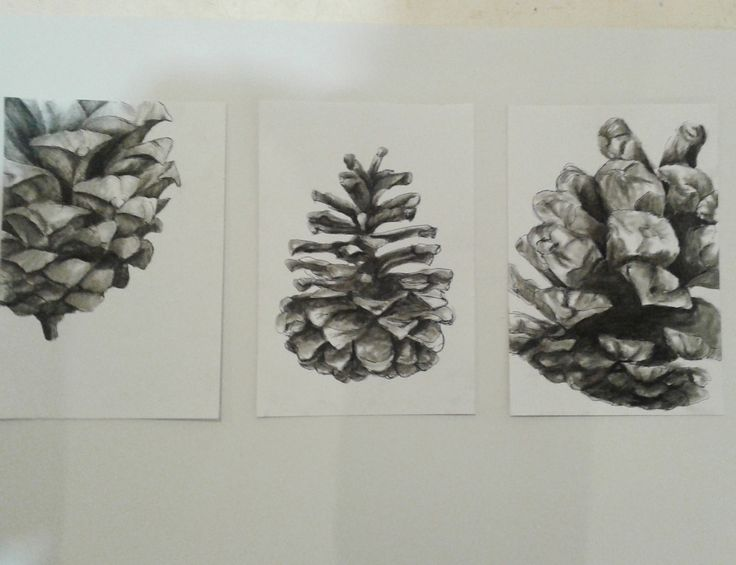 Charcoal Pinecones. Stace Scallan