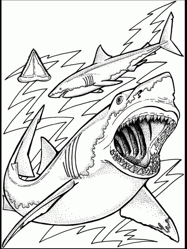 Coloring Pages Of Aquatic Animals : Best 25 ocean coloring pages ideas on pinterest animals