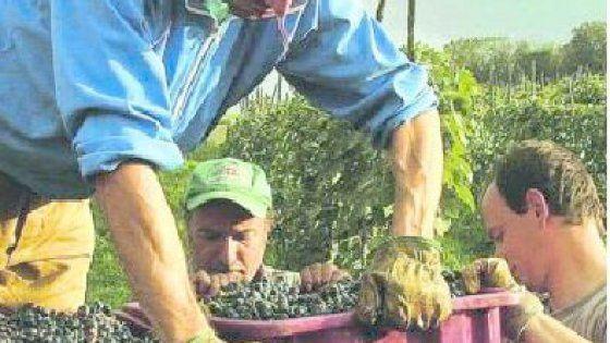 L'intervista. Parla il marito della bracciante uccisa dalla faticaun mese fa mentre raccoglieva l'uva. Aveva 49 anni e tre