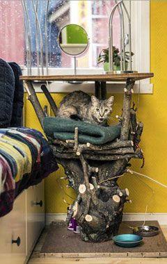 TRE TIL PUS: Katten har sin favorittplass i treet. Treet sto i hagen og skulle fjernes, men Turid omgjorde tretoppen til et naturlig hvilested for innekatten. Nå har det fått et nytt liv inne på «Mellomrommet». FOTO: Jan M. Lillebø