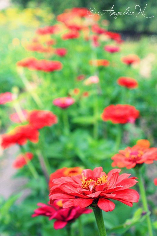 Frumoasa viata la tara...flori superbe,flori roditoare