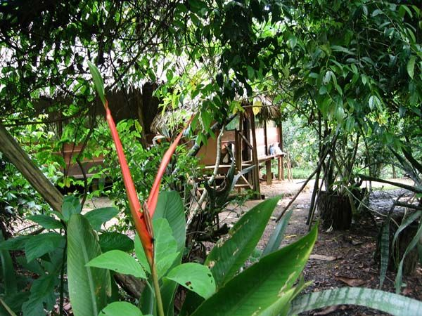 Estrella Ayahuasca' is a healing centre in the Peruvian Amazon not far from Iquitos, dedicated to the research of Ayahuasca and other medicinal plants. Visitors may participate at Ayahuasca ceremonies and/or receive treatment under the professional guidance of the 'curandera' or 'ayahuasquera' Norma Panduro, one of the few female shamans of this region. It is read more