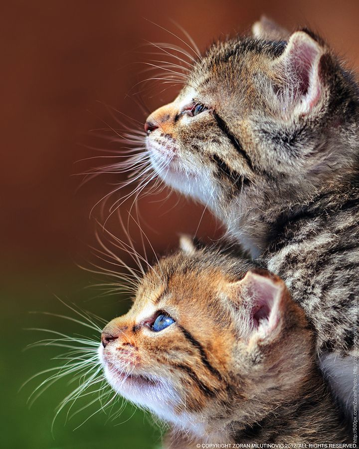 I love kittens. I have a soft spot for them :/
